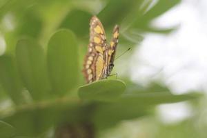 mariposa fondo verde