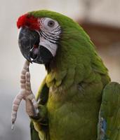o papagaio pensante foto