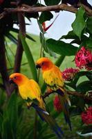 imagem de papagaios