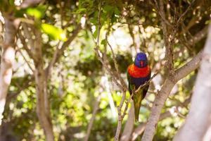 papagaio brilhante no parque loro