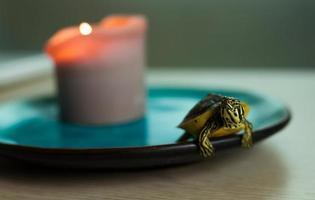 pose de tartaruga foto