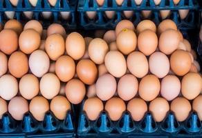 painel para ovos foto