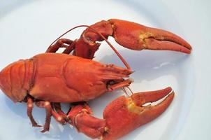 lagosta cozida foto