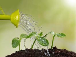 regador molhando plantas jovens