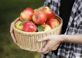 maçãs foto