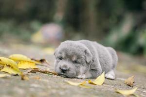 cachorro. foto