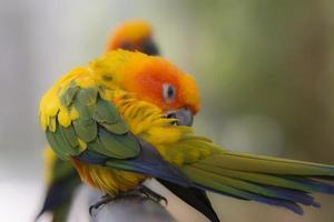 animais, papagaios foto