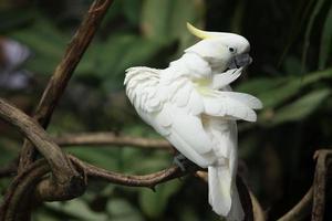 lindo papagaio branco foto
