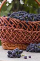 cestas com uvas da natureza