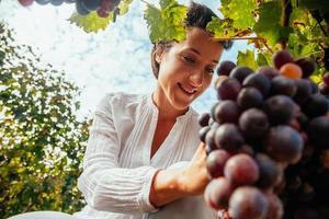 colheita feminina de uva