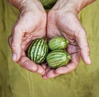 jardim em suas mãos foto