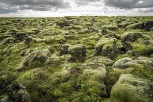 rochas e musgo