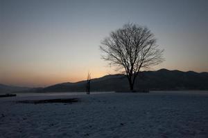 árvore; alvorecer; foto