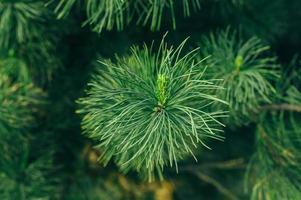 pequena árvore foto