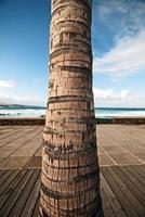Palmeira foto