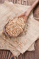 grãos de trigo foto