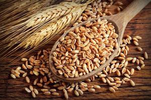 colher com espelta e espigas de trigo