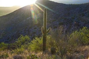 pôr do sol com cactos verdes lindos na paisagem