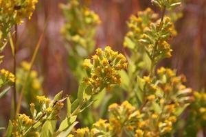 flores amarelas foto