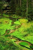 pequeno rio foto