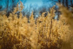 natureza foto