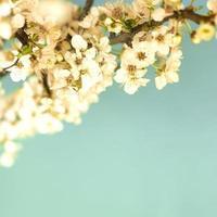 flores da primavera