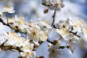 flores da primavera foto