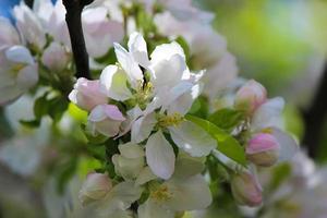 frescor da primavera foto