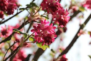 floração da primavera