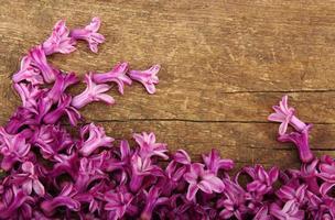 Flor da Primavera foto