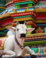 estátua de vaca sagrada hindu foto