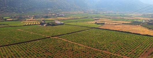 plantação, pantelária foto