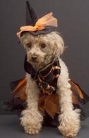 gracinha de bruxa foto
