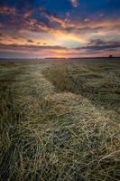 paisagem de campo de restolho foto