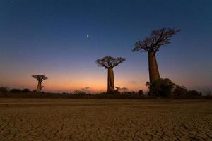 paisagem noturna de baobá foto