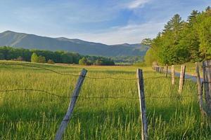 paisagem primavera hyatt lane