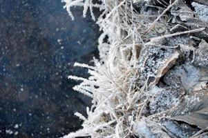 geada do inverno foto