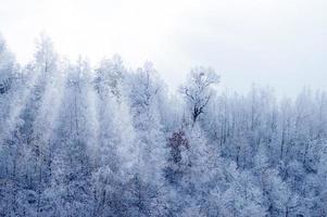 madeira de inverno foto