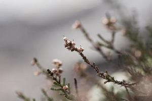 galhos de inverno foto