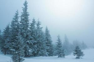 floresta enevoada do inverno