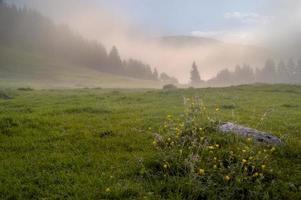 Prado alpino no nevoeiro da manhã foto
