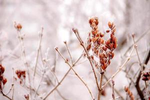 natureza do inverno foto