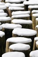 tocos de árvores de inverno foto