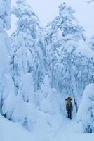 andando na floresta de inverno foto