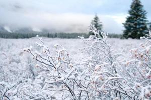 paisagem de neve e inverno foto