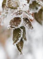 fundo de inverno