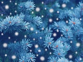 magia do inverno na floresta foto