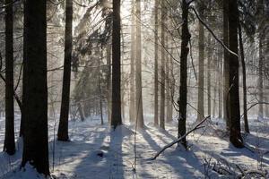queda de neve no sol de inverno foto