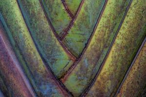 bananeira de fundo. foto