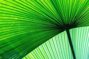 folhas de bananeira foto